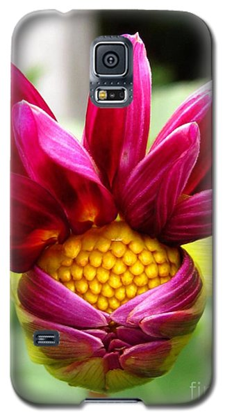Galaxy S5 Case featuring the photograph Dahlia From The Showpiece Mix by J McCombie