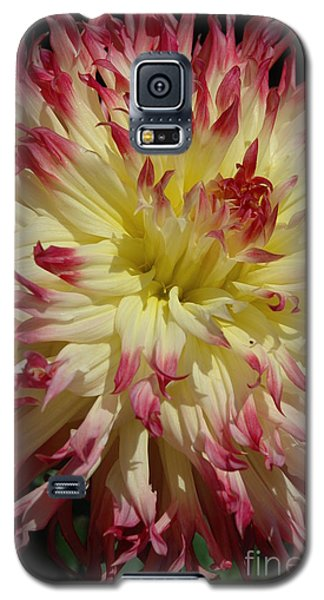 Galaxy S5 Case featuring the photograph Dahlia II by Christiane Hellner-OBrien