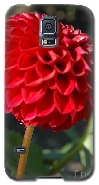 Galaxy S5 Case featuring the photograph Dahlia IIi by Christiane Hellner-OBrien