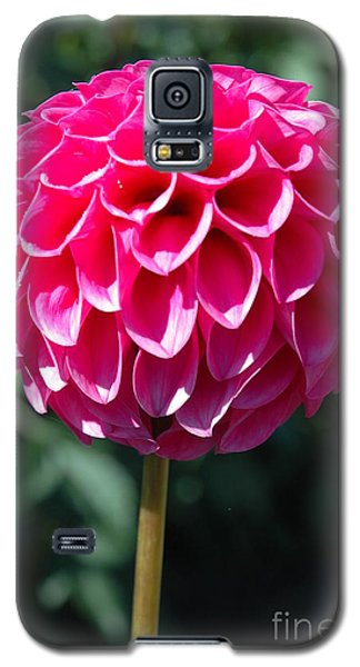 Galaxy S5 Case featuring the photograph Dahlia IIII by Christiane Hellner-OBrien