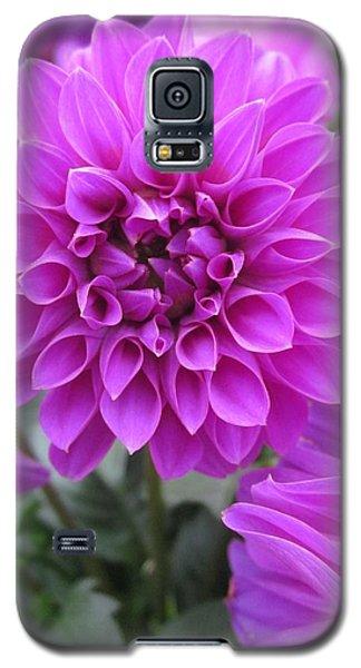 Dahlia In Pink Galaxy S5 Case