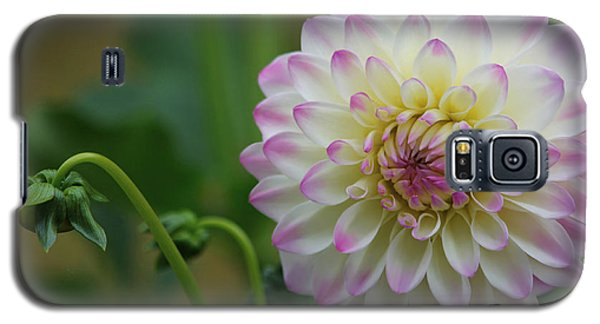 Dahlia In The Mist Galaxy S5 Case