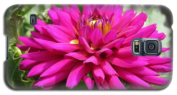 Galaxy S5 Case featuring the photograph Dahlia Named Andreas Dahl by J McCombie