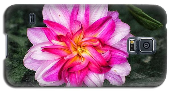 Dahlia Portrait Galaxy S5 Case