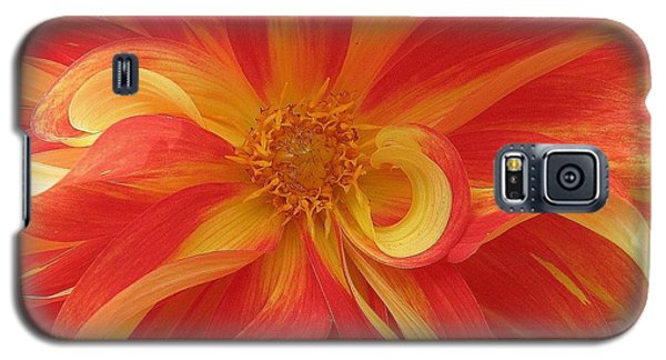 Dahlia Unfurling In Yellow And Red Galaxy S5 Case