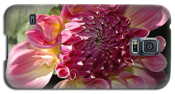 Galaxy S5 Case featuring the photograph Dahlia V by Christiane Hellner-OBrien