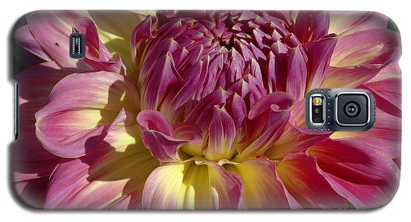 Galaxy S5 Case featuring the photograph Dahlia Vii by Christiane Hellner-OBrien