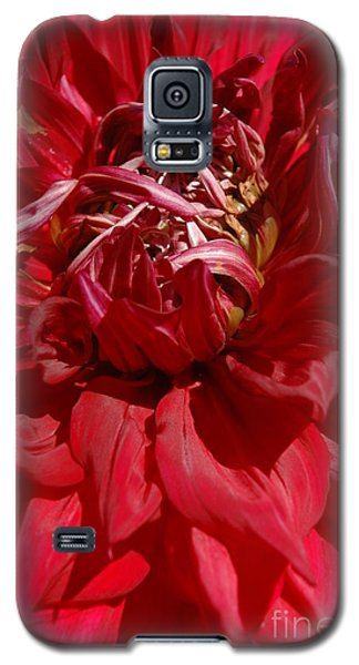 Galaxy S5 Case featuring the photograph Dahlia Viiii by Christiane Hellner-OBrien