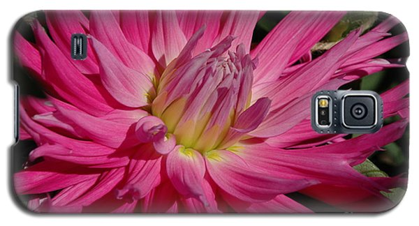 Galaxy S5 Case featuring the photograph Dahlia X by Christiane Hellner-OBrien