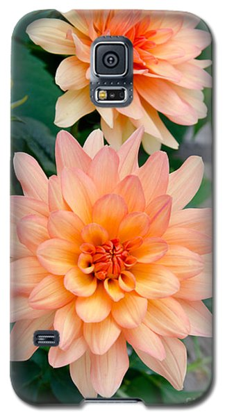 Dahlias Galaxy S5 Case