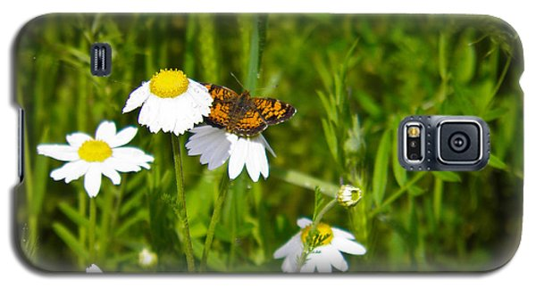 Daisey And Butterfly Galaxy S5 Case