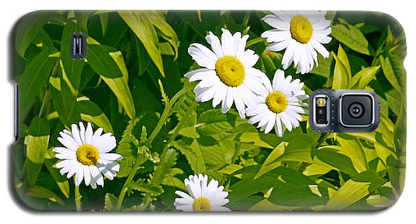 Daisies In Provincetown Galaxy S5 Case by Tom Doud