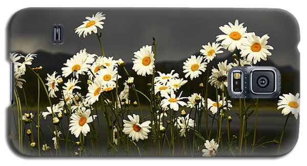 Daisies In Storm Light Galaxy S5 Case