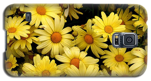 Daisies Galaxy S5 Case by John Bushnell
