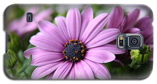 Galaxy S5 Case featuring the photograph Daisies by Lynn England