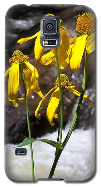 Daisies Near The Water  Galaxy S5 Case