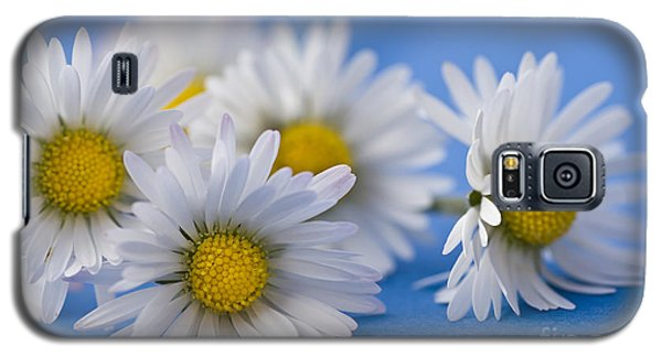 Daisies On Blue Galaxy S5 Case
