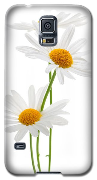 Daisies On White Background Galaxy S5 Case