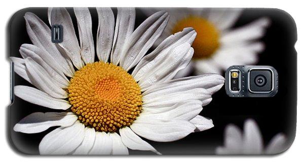 Daisies Galaxy S5 Case