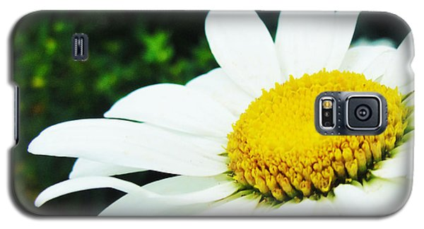 Galaxy S5 Case featuring the photograph Daisy Daisy by Tiffany Erdman