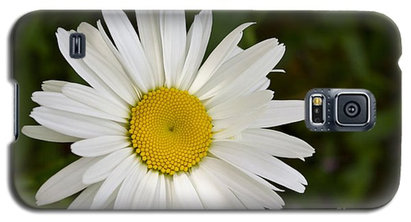 Galaxy S5 Case featuring the photograph Daisy Day by Maria Janicki