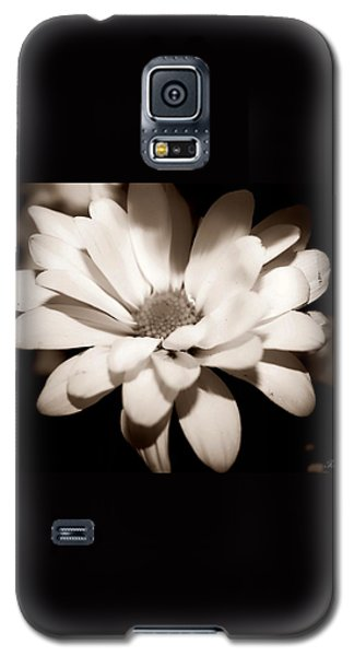 Galaxy S5 Case featuring the photograph Daisy by Debra Forand