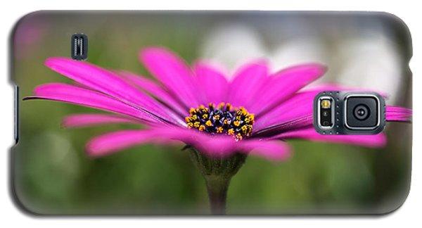 Daisy Dream Galaxy S5 Case