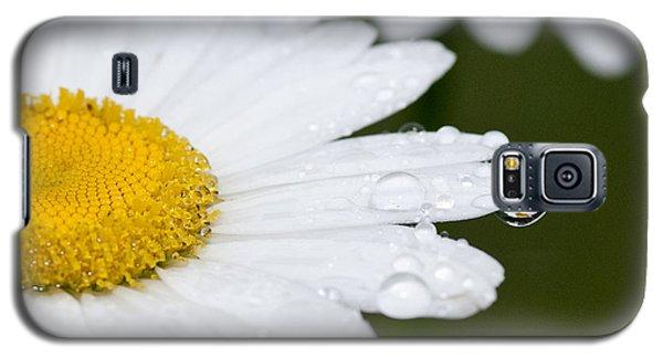 Daisy In A Drop Galaxy S5 Case