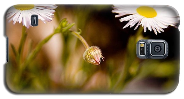 Daisy In A Field Galaxy S5 Case