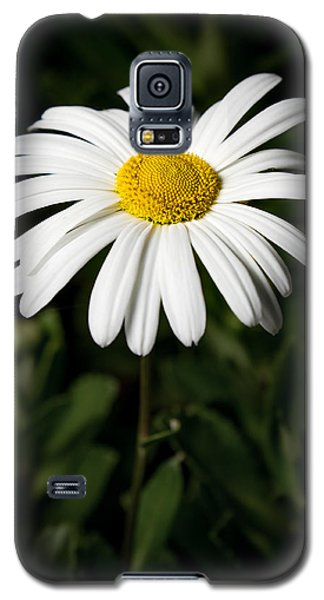 Daisy In The Garden Galaxy S5 Case