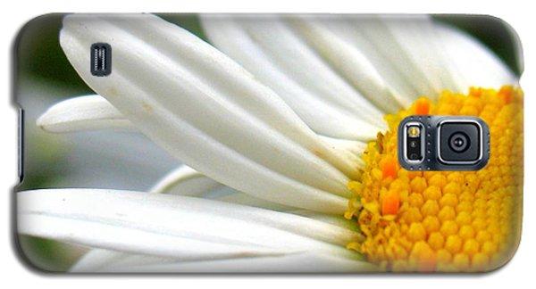 Daisy Galaxy S5 Case by Patti Whitten