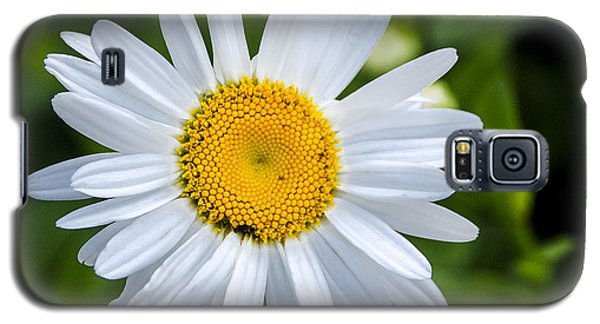 Galaxy S5 Case featuring the photograph Daisy by Phil Abrams