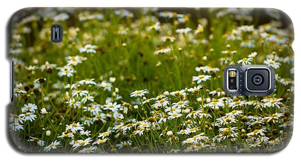 Daisy Sunrise Galaxy S5 Case by Sebastian Musial