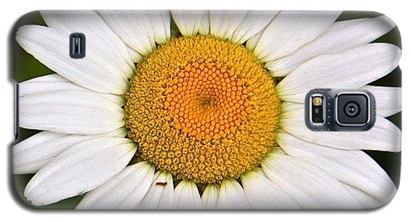 Galaxy S5 Case featuring the photograph Daisy by Susan Crossman Buscho