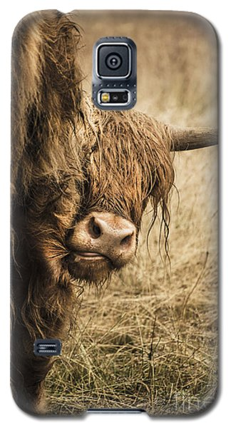 Highland Cow Damn Fleas Galaxy S5 Case