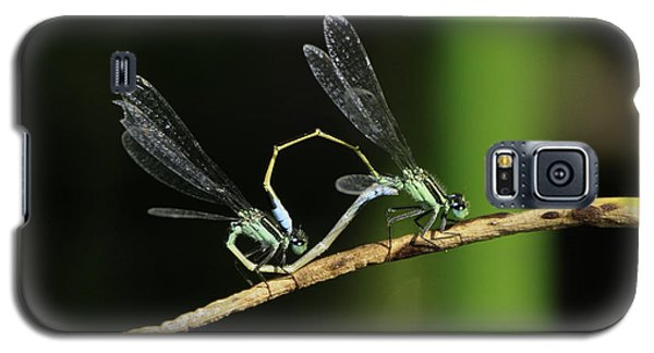 Galaxy S5 Case featuring the photograph Damselflies Mating by Bradford Martin