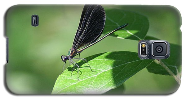 Galaxy S5 Case featuring the photograph Damselfly  by Karen Silvestri