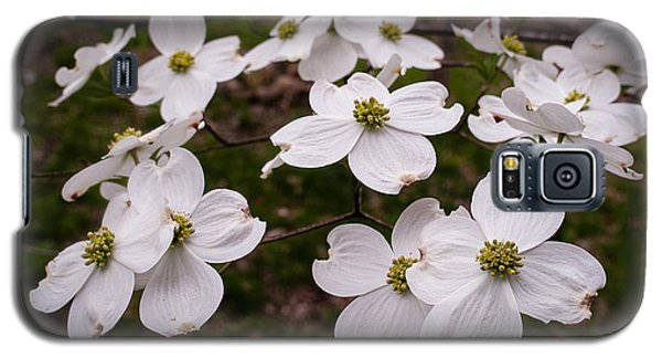 Galaxy S5 Case featuring the photograph Dance Of The Dogwoods by Wayne Meyer