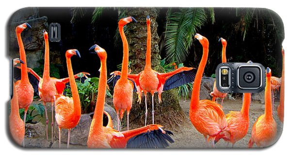 Galaxy S5 Case featuring the photograph Dance Of The Flamingos by Phyllis Beiser