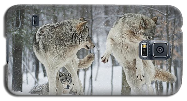 Galaxy S5 Case featuring the photograph Dances With Wolves by Wolves Only