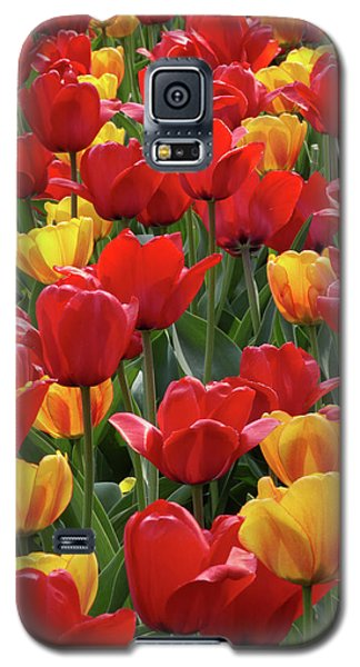 Galaxy S5 Case featuring the photograph Dancing Tulips by Harold Rau