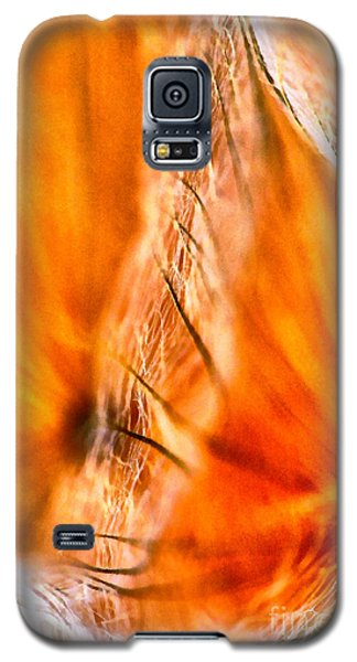 Dandelion Abstract Paint Galaxy S5 Case
