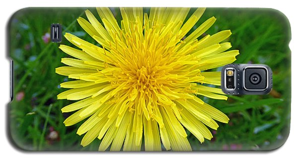 Galaxy S5 Case featuring the photograph Dandelion And Spider by Laurie Tsemak