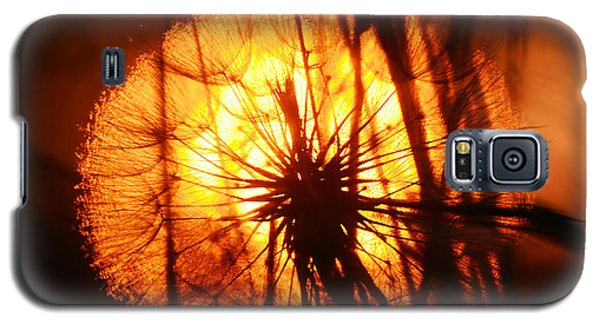 Dandelion At Sunset Galaxy S5 Case