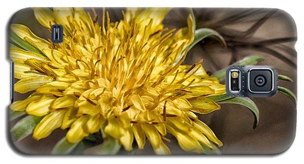Dandelion Galaxy S5 Case by Betty Depee