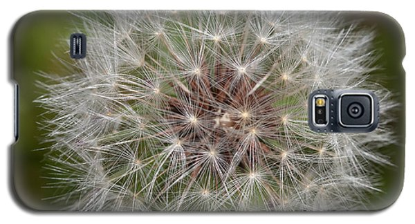 Dandelion Clock Galaxy S5 Case