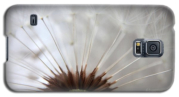 Dandelion Cross Section Galaxy S5 Case