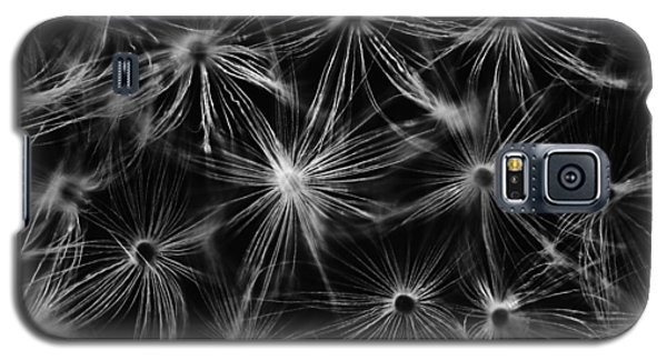 Dandelion Detail Black And White Galaxy S5 Case