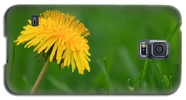 Dandelion Flower Galaxy S5 Case