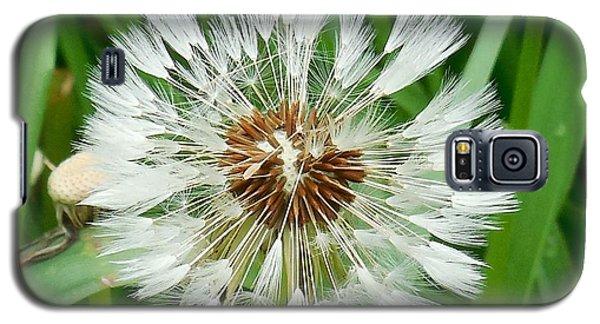 Dandelion Fluff Galaxy S5 Case by Karen Molenaar Terrell